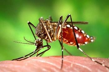 zika-virus-1